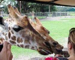 Giraffe Ranch Farm Tours – Photo Gallery
