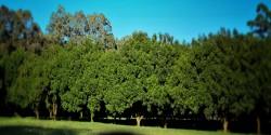 Medowie Macadamias | Enjoy Australia's best nuturally